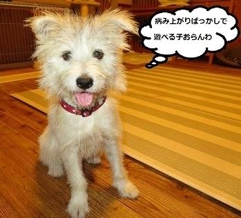 13_NEW.jpg