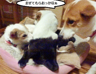 5_NEW.jpg