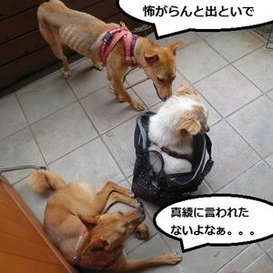 7_NEW.jpg