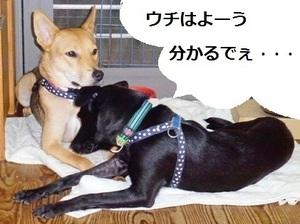 9_NEW.jpg