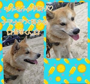 Collage202021-06-212020_29_20.jpg