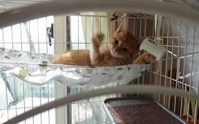 ①子猫ハンモックでえいやー20161201_003046.jpg