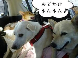 「おでかけるんるん」.jpg