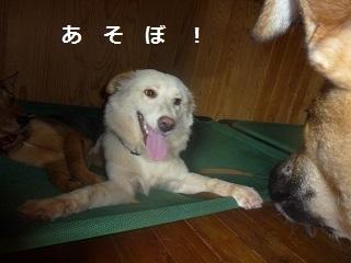 おおやぶ (8).JPG