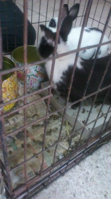 ウサギ警察mini_170107_14320002.jpg