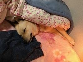 ベッドお姉さんのimage3.JPG