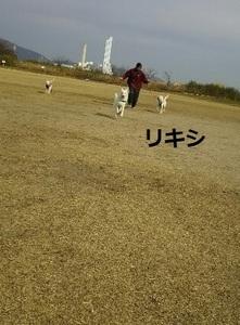 リキシ走るDSC_2063.JPG
