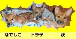 三姉妹 - コピー.JPG