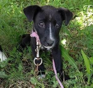 子犬2か月♀1591795577213.jpg