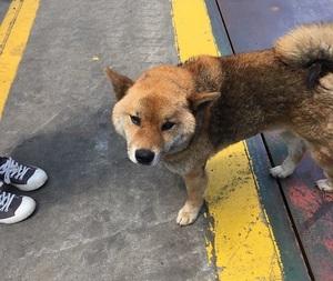 廃材処理場の犬image0.jpeg