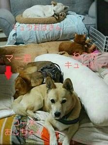 犬ネコ密集帯.jpg
