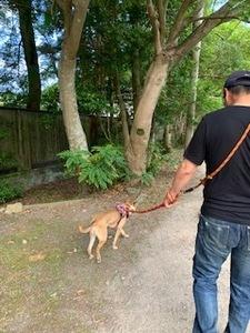 真綾散歩image2.jpeg