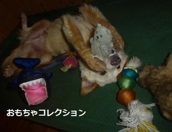 1おおやぶとおもちゃ.JPG