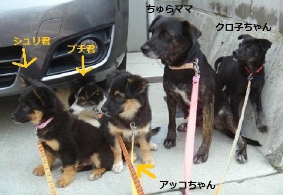 1母犬と子犬たち_2.JPG