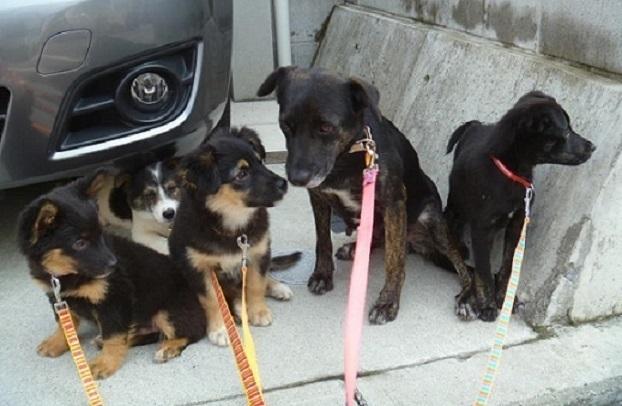 2母犬と子犬たち.JPG