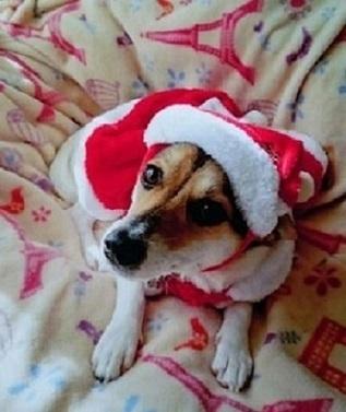 5クリスマス.jpg