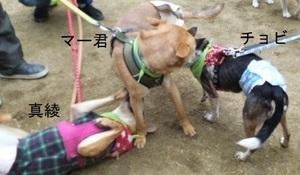 chobi譲渡会12.22-2.jpg