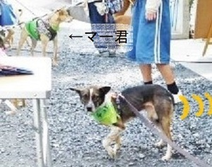 chobi譲渡会12.8.jpg