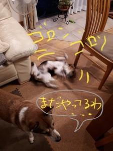 20170925_121735.jpg
